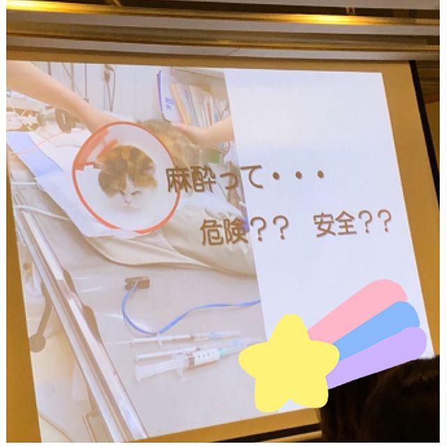 よくお客様から、麻酔は体への負担が大きいから・麻酔をかけると目覚めるか分からないから怖いと相談される事があります。私の愛犬ももうすぐ3歳になるので、歯科検診を受ける時期にきているので、実際に麻酔というものが、どれくらいの危険性?どれくらい安全なのか?🤔を知る為に、東京の多摩川にあるhiff cafe tamagawaさんで開催された、日本では数名しかいない、大変貴重なわんちゃん・ねこちゃんの麻酔専門医さんのセミナーに参加して来ました⚕️ 以前に上げさせて頂いた、獣医さんの動画でも指摘されておられた様に、麻酔をしないでする無麻酔歯石除去はあたらめてデメリットしかない事が分かりました。麻酔は、100パーセント安全ですとは言えないけれど、このセミナーを受けて自分の愛犬には専門外来で麻酔専門医さんを呼んでいる動物病院で、歯科検診を受けさせたいなと思いました️ でも富山県に麻酔専門医を呼んでる動物病院なんか無いよな〜って思っていたら、何と何と、富山県に月に一回来てた〜〜🤣 しかも、皮膚専門医の獣医さんも〜 さらにさらに、麻酔専門医さんと皮膚専門医さんとご飯に連れて行ってもらい、仲良くさせて頂きました〜 どちらの獣医さんも、私達トリマーに対してのリスペクトが凄くて、めちゃめちゃ嬉しかったです専門分野には、専門医に繋ぎ病気に苦しむわんちゃんを飼い主さんと獣医さんと私達トリマーが連携を取って、今よりも快適に過ごせるようにお手伝いするのだ♀️ #toyama  #富山#toyamashi#富山市  #imizusi #射水市 #takaokasi#高岡市#砺波市#dogsalon  #ドッグサロン  #torimmingsalon  #トリミングサロン #わんこのQOL向上委員会#dogslife #スキンケア#麻酔専門医#皮膚専門医#petstagram#BOKUMO#BOKUMO取扱店富山#bokumo#アニマー湯#animaryu取扱店#No無麻酔歯石取り#アーガイルディッシュ取扱店#ナチュラルハーベスト取扱店##完全予約制