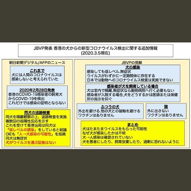 コロナウイルスの最新情報が入ってきたので、再度投稿します️ 日本臨床獣医学フォーラムからの発表になりますので、一読宜しくお願い致します♂️ 香港の犬からの新型コロナウイルス検出に関する追加情報これまでの情報ならびに獣医学の常識から,犬には人間のコロナウイルスは感染しないだろうと考えて情報を発信して参りましたが,どうやらわれわれ獣医界の知らないことが起こったようです.2月下旬に香港の60歳の女性で新型コロナウイルス感染が確認され,その人が飼育する老齢のポメラニアンの鼻と口の材料に新型コロナウイルス感染の弱い陽性反応がみられました.これがウイルスの付着によるものか,感染なのかを調べるため,その後のウイルスの存在を追跡したところ,複数回の弱陽性反応が出たことから,香港漁農自然護理署(AFCD)は犬が「低レベルの感染」をしていると結論しました.同時にこの所見は大学や国際獣疫事務局(OIE)の専門家たちによっても確認され,「人間から動物への感染例の可能性が高い」とされました.この犬は新型コロナウイルス感染のの症状を全く見せていないといわれていますが,香港政府が先月28日に出した新型コロナウイルスに感染したペットを14日間隔離する措置を受けています.香港では,別の感染患者の犬も1頭隔離されており,現在は陰性となりましたが,隔離は続けられているそうです.香港政府は「現時点でペットがウイルスを媒介するというデータはない」と強調しています.そして,動物が感染源になるといった過剰な心配を抱かないように呼びかけています.以上が朝日新聞デジタルおよびAFPが報じたニュースの抜粋です.犬が感染する可能性は極めて低いといったわれわれの考えは間違っていたことがわかりましたので,ここに正しい情報をお知らせしました.それではわが国の犬においてどのような対応ができるのかを以下にまとめます.1. 犬における感染これまでの香港の2頭だけの経験では,感染であっても低レベルであり,犬には症状は出ないようです.しかし,生きたウイルスが少量ながら一定期間そこに存在するということで,注意は必要です.一方,わが国では動物に対して人間のコロナウイルスのPCR検査を行う体制は全く整っていませんので,検査を行うかどうかについては保健所の判断と思われます.動物病院に来院されても国立感染症研究所から出されている感染管理ガイドラインに沿った対応はできません.2. 人間が感染して家庭に犬がいる場合犬は家の中で隔離してください.幸いに犬が健康を害することはないようなので,隔離しておけば自然に感染はなくなるものと思われます.症状がなければ動物病院でできることもありません.また,人間のコロナウイルス感染者を受け入れることができるような病院に相当する動物病院の体制は整っていません.感染した人間が軽症で家にいるならご自分で犬の世話をしてください.感染した人間が入院する際には,犬をどうするかについては,医師ならびに保健所の指示を仰いでください.3. ふつうの家庭犬は外出を避ける,外に出るのも家の周りだけにする,人混みには連れて行かない,他の犬との接触を避けるためドッグランも利用しないことで,自宅にいるのが最も安全と思われます.犬にはコロナウイルスが入ったワクチンもありますが,これは犬の消化器コロナウイルスのワクチンで,人間のコロナウイルスに対しては効きません.4. 猫はどうする猫にも感染のリスクはあると考えて,外に出さず,家の中においてください.猫のコロナウイルスには,多くの猫が持っている病原性のほぼない猫腸コロナウイルスと,それが突然変異してごく少数の猫に病原性を示す猫伝染性腹膜炎ウイルスがありますが,これらは人間のコロナウイルスとは異なり,猫ではワクチンはありません.猫に人間のコロナウイルスが感染するかどうかについては,SARSコロナウイルス大量を実験的に気管内に接種して感染が起こることが示されていますが,これはあくまでも自然界では起こりえないような実験的な条件であり,その場合も重大な病気は起こらず,すぐに感染から回復するとされています.したがって犬同様に対応してください.5. 最後に今回の事例では,犬は善意の第三者であり,たまたまウイルスをもらってしまったと考えられ,どうして犬に感染が起こったのかについては,老齢の犬であったからなのか,それとも犬はすべてそうなのかはまだ例数が少ないためわかりません.しかし,中国のように多くの感染患者がいる場所でも,犬から病気をもらったというような状況は報告されていません.犬は大切な家族の一員です.決して犬を悪者にしたり,飼育を放棄したりしないよう,そして過剰に恐れることなく,ふつうに対応してください.文責日本臨床獣医学フォーラム会長石田卓夫(獣医師,農学博士,日本